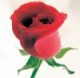 Earth United: 4.5 Roses on 'Red Roses for Authors'